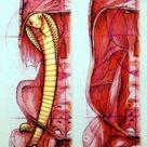 Cobra: Core Support | Anatomy Trains Blog