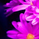 [Download] Beautiful Whatsapp DP Flower Images