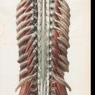 Bourgery, Jean Baptiste Marc; Jacob, Nicolas Henri [Hrsg.]: Traité complet de l'anatomie de l'homme: comprenant la médicine opératoire (Band 3, Atlas) (Paris, 1844)