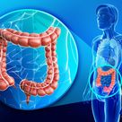 Colon (Large Intestine): Facts, Function & Diseases