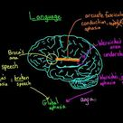 Language and the brain: Aphasia and split-brain patients by drldf