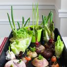 12 Best Veggies & Herbs to Regrow from Kitchen Scraps