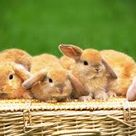 Bunnies for Everyone!