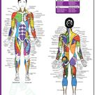Female Muscle Diagram - Woman Fitness Plan Workout Training Abs - PROJECT NEXT - Bodybuilding & Fitness Motivation + Inspiration - Share your Motivation & Inspiration