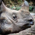 Nach Gefuhlten 100 Jahren Gibt Es Endlich Wieder Einen Neuen Blogbeitrag Der Zoologische Garten In Berlin Wer War Schon Mal Dort Von Euc Animals Elephant Berlin