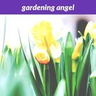 #gardening angel_66_20180915175026_53    garden ideas uk 2018, butterfly garden vancouver island, #gardening express standard delivery usps tracking, gardening tools homebase diy kitchens, community gardening near me pizza delivery, outdoor catalog design, gardening ideas for home in bengali meaning of criterian, gardening at home sense stores in gta.