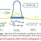 THE OPENING OF LYMPHATIC CAPILLARIES AND SUCTION CUPS memo physio  english french spanish version