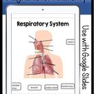 Digital Anatomy Diagrams