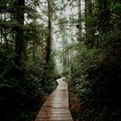 Book This Epic Adventure To Hot Springs Cove In Tofino, Vancouver Island   The Mandagies