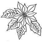 Poinsettia Flower Bloom In December Coloring Page - Download & Print Online Coloring Pages for Free