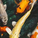 Fish Water Animal Swim iPhone Wallpapers