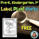 Plants   Label the Parts