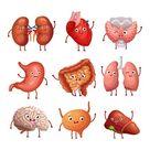 Cute Cartoon Human Organs Stomach Lungs And Kidneys Brain