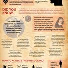 Pineal Gland : How To Activate Your Third-Eye?