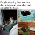 Massive Mid-Week Kitty Litter Which Requires Clearing (67 Memes)