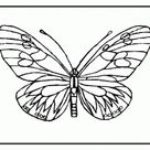 Butterfly Coloring Pages (11) - Coloring Kids - Coloring Home Pages