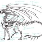 Zha Skeleton Anatomy by Zhantilniiraala on DeviantArt