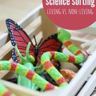 Preschool Science Sorting - Living vs. Non Living - No Time For Flash Cards