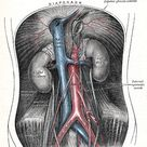 VI. The Arteries. 5a. 2. The Abdominal Aorta. Gray, Henry. 1918. Anatomy of the Human Body.