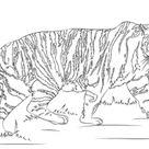 Tiger Coloring Pages - Worksheet School