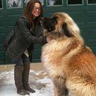 Big Dogs