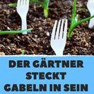 Garten-Pflege leicht gemacht – mit diesen einfachen Mitteln!