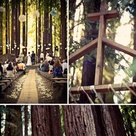 Forest Wedding Themes