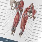 Muscle Cheat Sheets