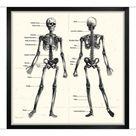 A1 Poster. Labelled Human Skeleton. Engraving