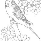 Beautiful Parakeet And Flower Coloring Page