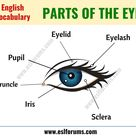 Parts of the Eye Learn Different Eye Parts with ESL Picture   ESL Forums
