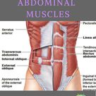 Everything You Need to Know for Stronger Abdominal Muscles
