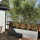 Sichtschutz - Garten & Wohnen