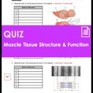 Quiz - Muscle Tissue Structure and Function (HS-LS1)