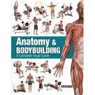 Anatomy & Bodybuilding : A Complete Visual Guide