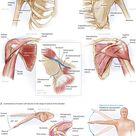 Shoulder Pain and Rotator Cuff Disease