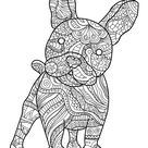 French Bulldog and its harmonious patterns - Dogs Coloring Pages for Adults - Just Color