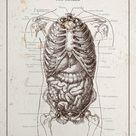 Digestive System Gastroenterology Poster Nutritionist Gut Health Art 8x10 9x12 11x14 16x20 18x24