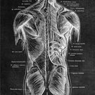 Human Anatomy Artwork Medical Print Wall Picture Skeleton Organ Muscle Retro Black White Poster Body Education Canvas Painting - 60x80cm no frame / B