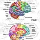 Areas of Cognitive Brain Function and Global Brain Contusions