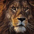 Prosperity and Abundance - Tiger's Eye, Pyrite and Hematite Stretch Bracelet