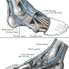 Anatomy & Physiology Illustration
