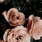 aesthetic lockscreen | Tumblr