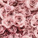 Pink roses  discovered by Anna on We Heart It