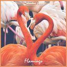 Flamingo 2022 Calendar: 12 Month Calendar for Flamingo's Lover (Paperback)