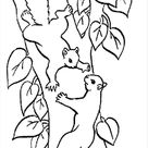 Coloring Pages Two Squirrels In A Tree (Mammals > Squirrel) - Free  - Coloring Home Pages