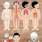 Human Body Systems for Kids Free Printables - Homeschooling | 123 Kids Fun Apps