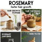 ROSEMARY - benefits, and uses for faster hair growth - The Little Shine