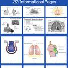 Respiratory System | High School