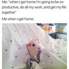15 Funny Hamster Memes To get You Through Friday